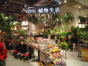 IDEAL 植物生活